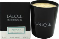 Lalique Candle 190g - Peuplier Aspen